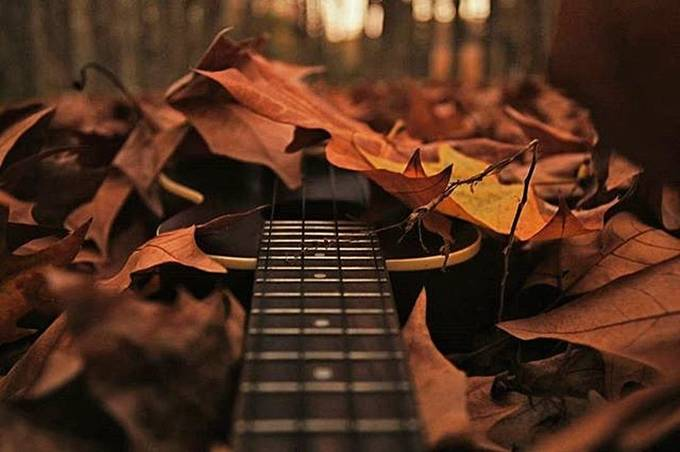 Autumn music  by albaem - Musical Instruments Photo Contest