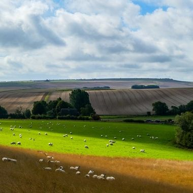 Fields near Silbury Hill, Wilts. UK