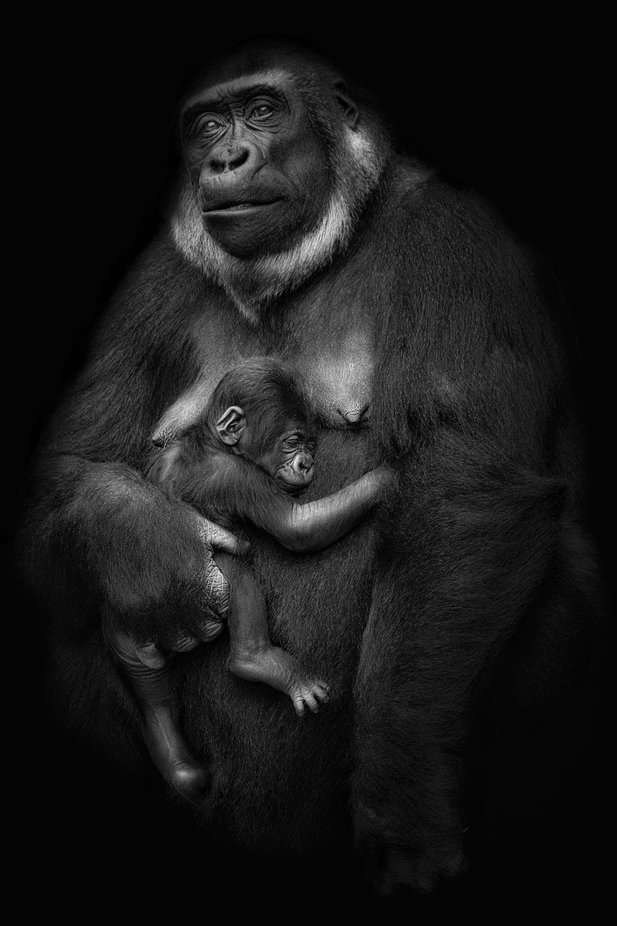 Wild love. by Sergio_Saavedra - Our World In Black And White Photo Contest
