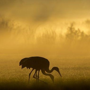 Creatures in Nature