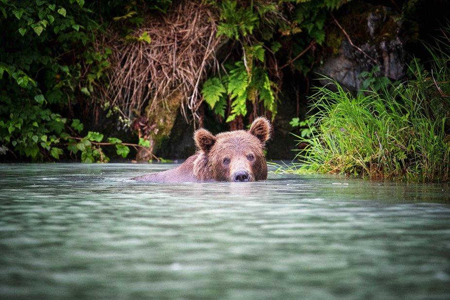 Wolverine Creek Alaska