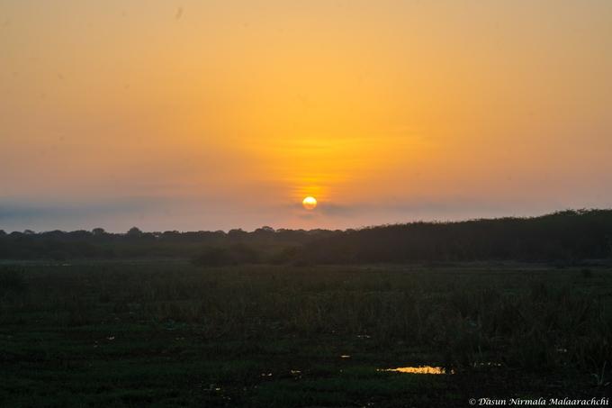 First Light at the southern tip of the Sri Lanka, Bundala National park