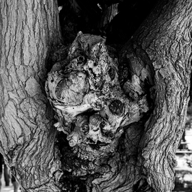 Old tree with face?