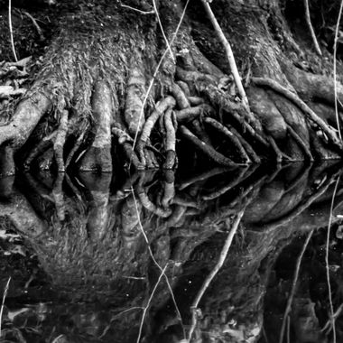 Root reflection