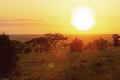 A Lion Celebrates the Sunrise