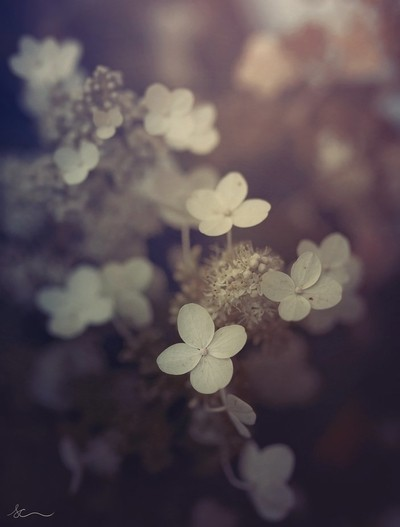 Fall bloom