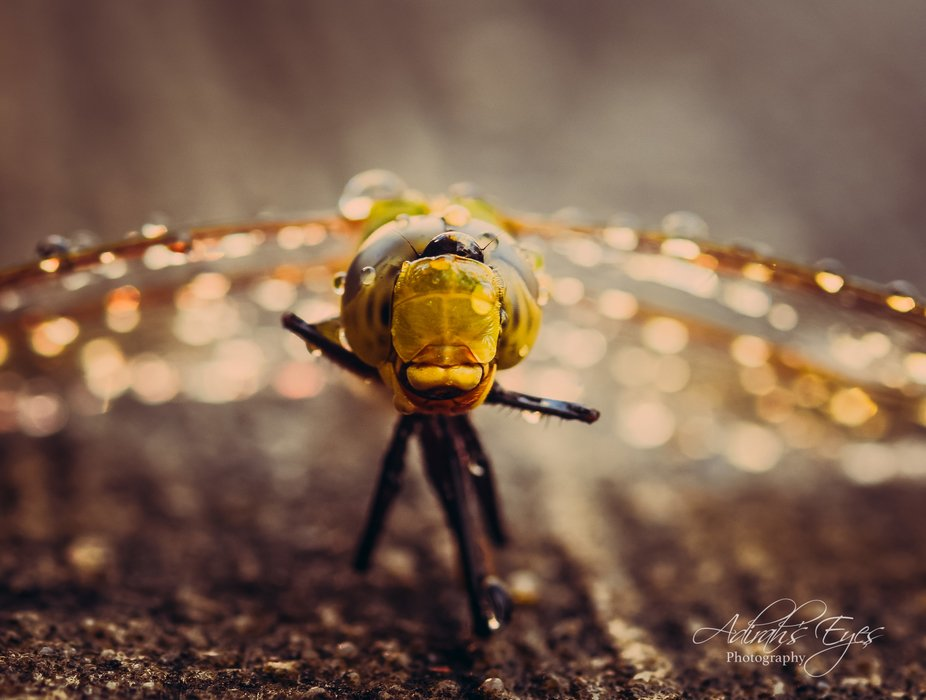 Caught this shot a dragonfly on my back patio just after a rain shower. It was the creature&#...