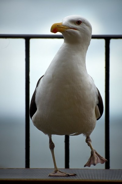 Stormin Seagull