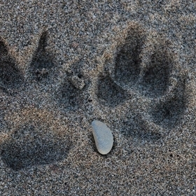 found these frozen paw prints in the sand walking along the Toronto beaches