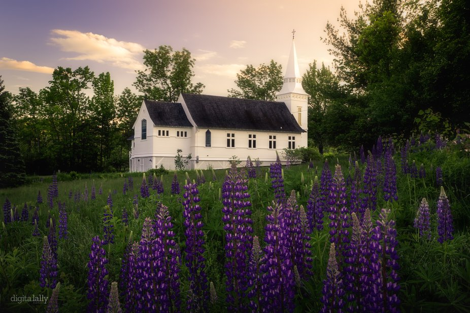 A chapel in Maine in the lupine fields.