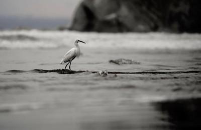 My dreamscape • • #pismobeach #birdsofinstagram #california #awesome_earthpix #vacationmode #hikingadventures #travel #travelholic #getoutside #getoutthere #nature_good #landscapephotography #ig_travel #natgeowild #ig_naturelovers #californiaadventure #ca