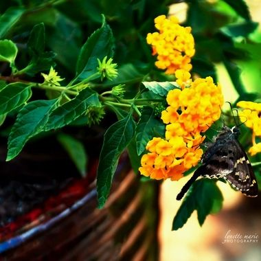 Butterfly on Button Buttered Flowers