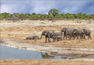 Life and death at the waterhole...