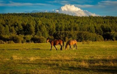 Sky Mountain Mustangs and cloud
