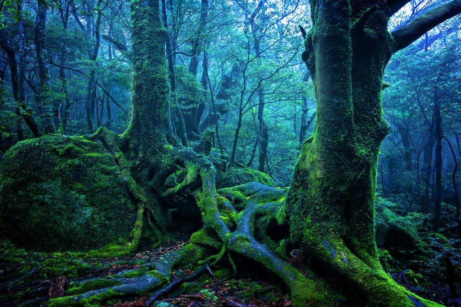 Magical Forest on Yakushima island