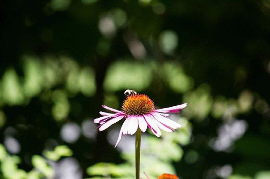 #photography #canon #canonphotography #cronin_photo_co #flowers #ogunquit