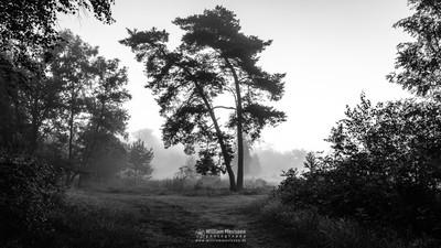 Misty Silhouettes Ravenvennen
