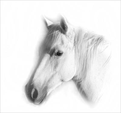 horse in high key