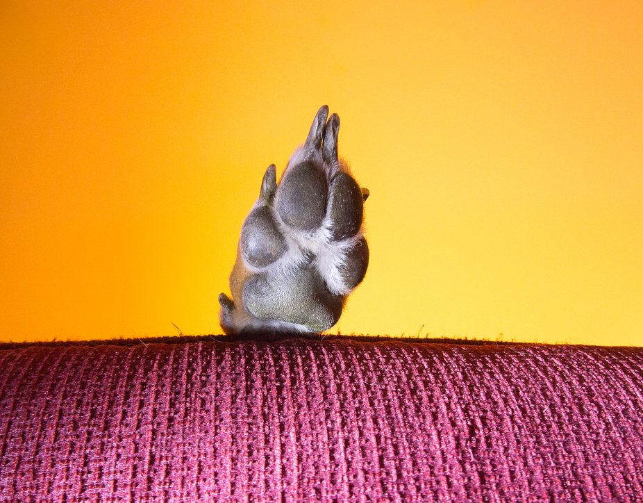 Colour image of a dog's paw over the edge of a red sofa, shot from below with an orange ...