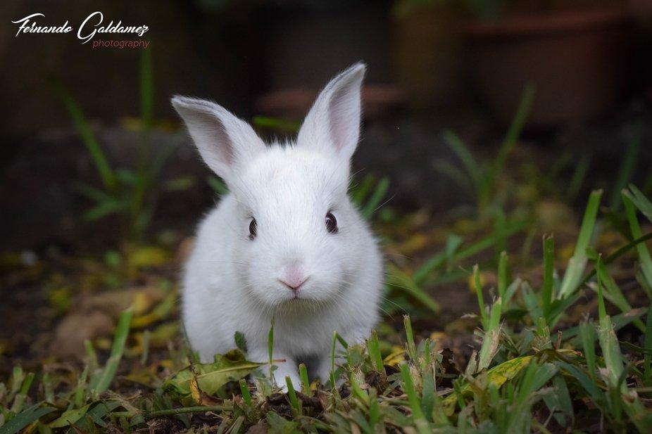 La ternura de un bebe conejo.