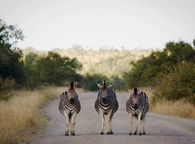 A different type of zebra crossing... by irisbreeman - Image Of The Month Photo Contest Vol 37