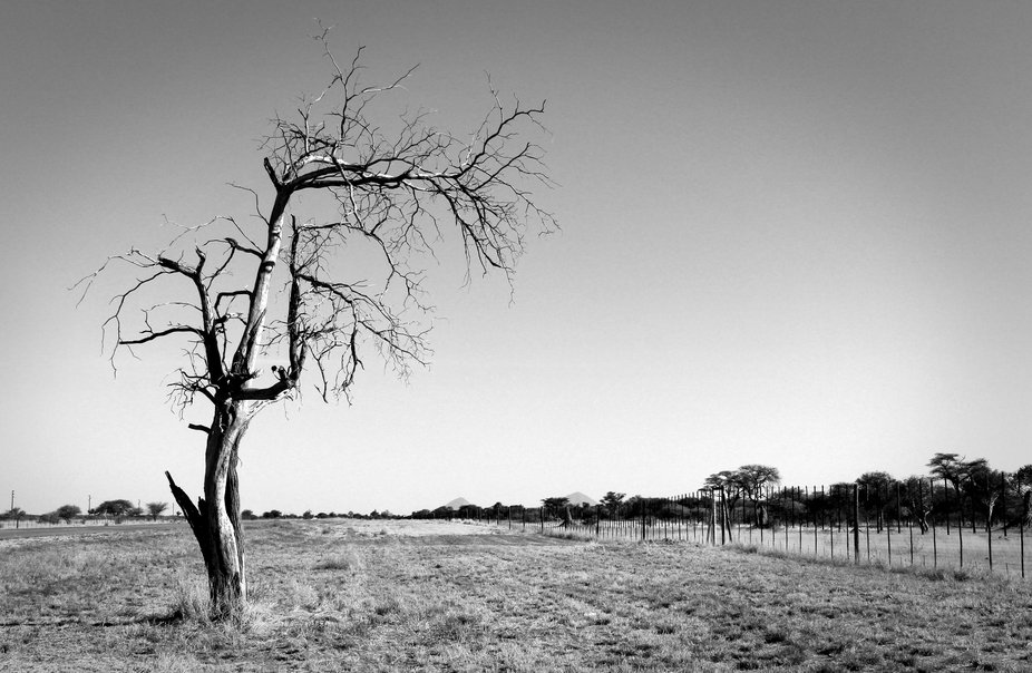 I've been wanting to photograph this tree for ages! Now, I finally had the chance.