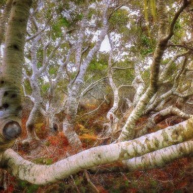 elfin-forest