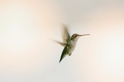 Lady Hummingbird checking to see who I am!