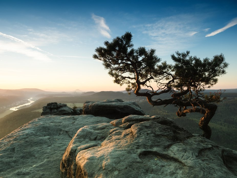 Lone Pine Tree atop of the Lilienstein Peak in the Saxon Switzerland National Park, Germany.