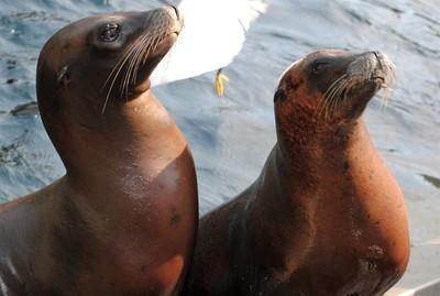 Sea Lions Posing