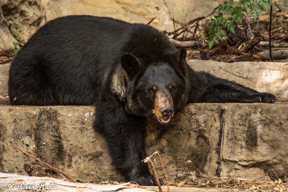 A Bears Life