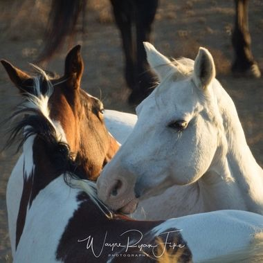 Green River, Corona California.  A small herd of horses in a pasture. Got some great photos here, definitely going back again another day for some more.