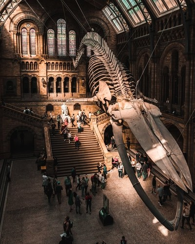 Natural History Museum - The Whale