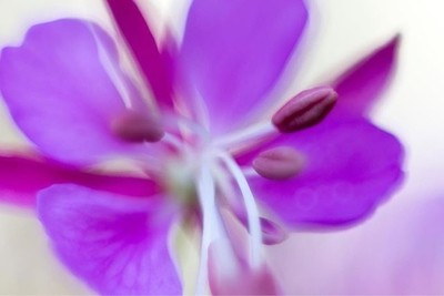 My garden, with my Nikon D800 + Nikkor 50mm + extension tubes. . . . #flashesofdelight #yourshotphotography #shotzdelight #swissphotographer #swissphotographers #fstoppers #watchthisinstagood #nikonphotography #nikontop #klickers #nikoneurope #top_macro #
