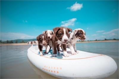 SUPer puppies