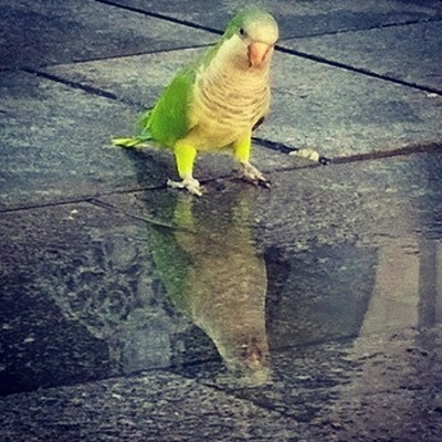 Oh how #beautiful I am!#green #yellow #reflection #birds