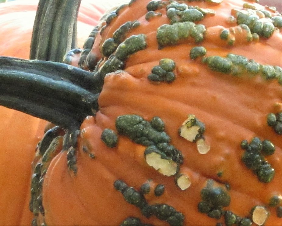 I WENT TO A FALL FESTIVAL & LIKED THE TEXTURE & COLORS OF THESE PUMPKINS
