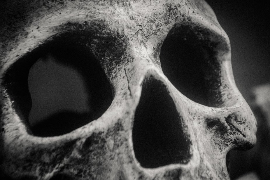 The fake skull in our aquarium.