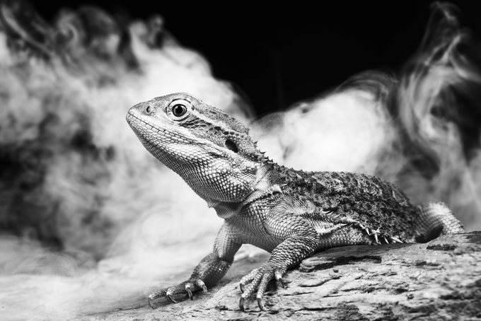 Reptile in the mist by LynetteRyan - Reptiles Photo Contest