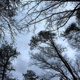 Taken with a Canon EOS Rebel T5. By far my favorite camera so far. This is an old photo of mine. I looked up and took a picture of the trees.