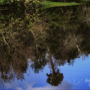 Reflections of the SJR