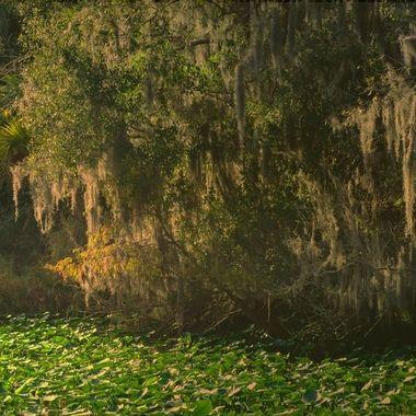 Calmness on the St Johns River