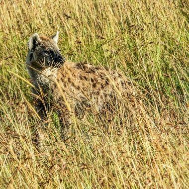Hyena Time to Go
