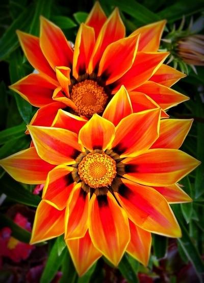 RIMG1078 orange beauty