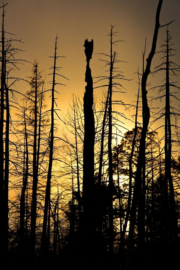This is a part of the forest from the Cerro Grande Fire in New Mexico.