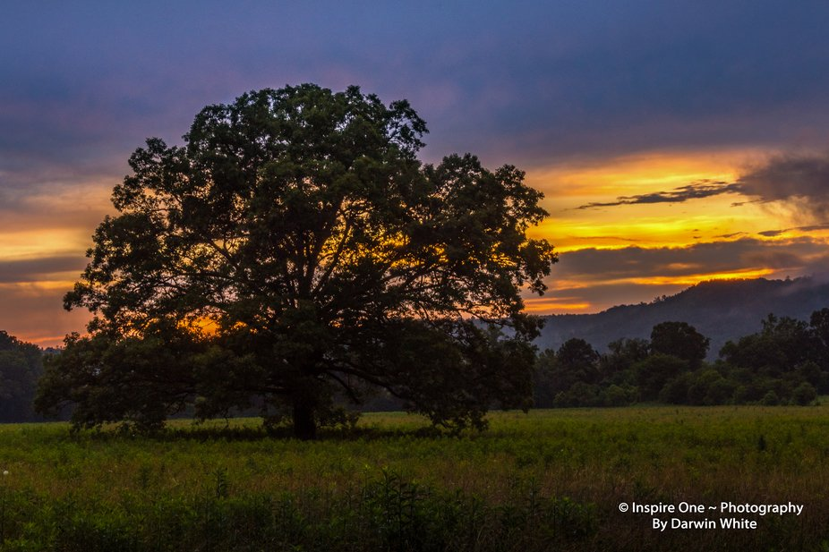 The Tree at Sunset--6