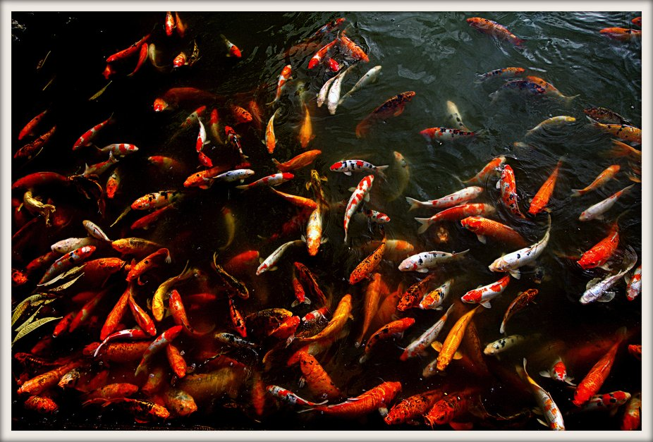 Fish in Hue, Vietnam