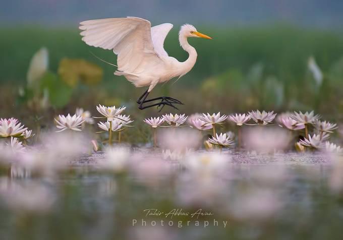 Morning Colors  by tahirabbasawan - Social Exposure Photo Contest Vol 17
