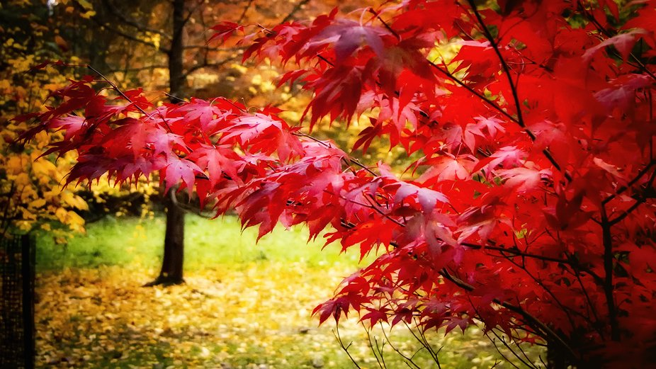 Autumn colours at Weston Birt aboretum