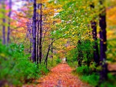 Dar's path into fall.